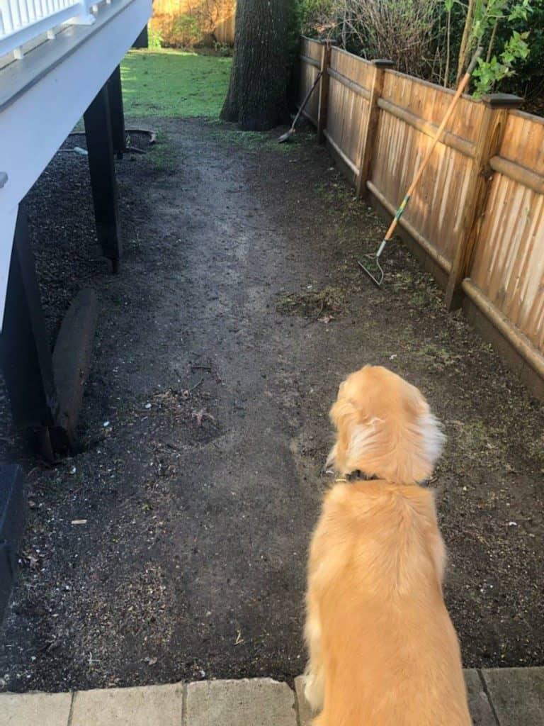 Side yard muddy