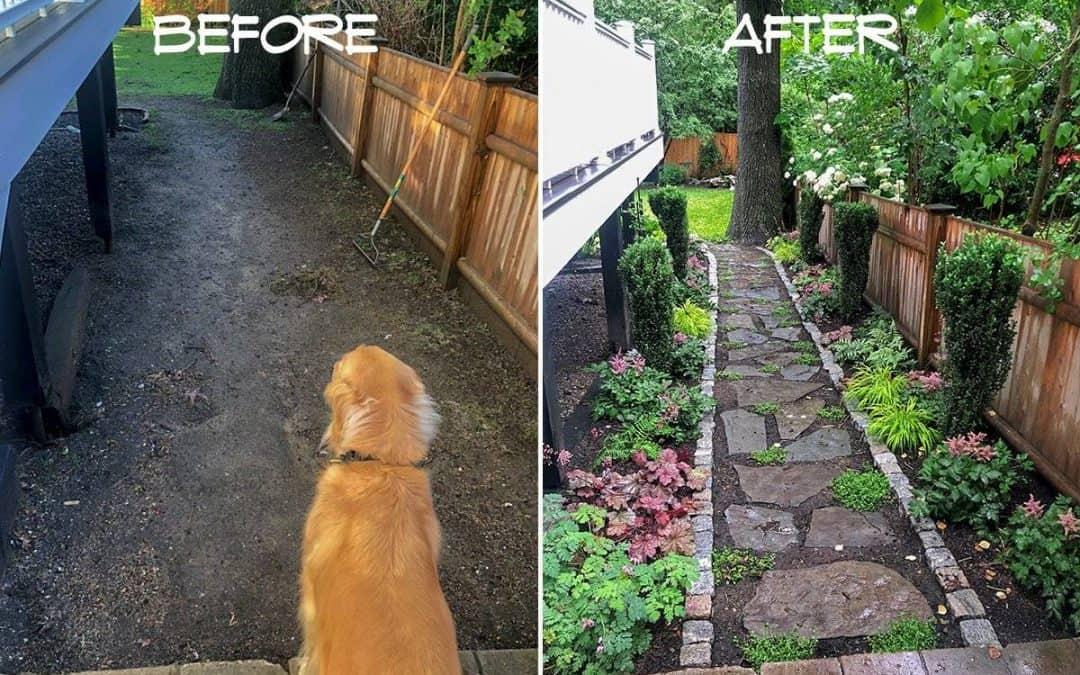A muddy side yard becomes a beautiful shade garden path