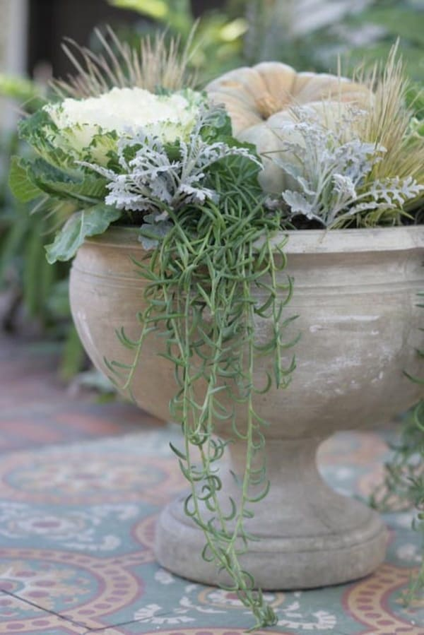 White urn planter with graceful plants spilling out