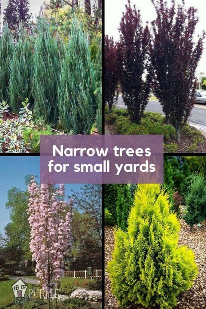 Narrow Trees for Small Yards Pin Image