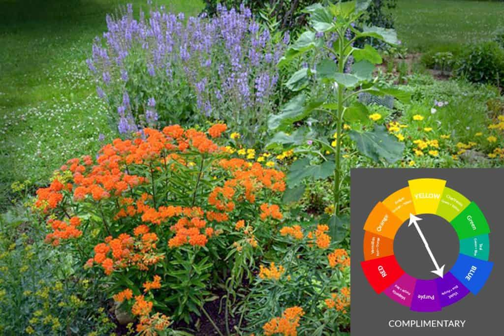Purple Salvia with Orange Butterfly weed