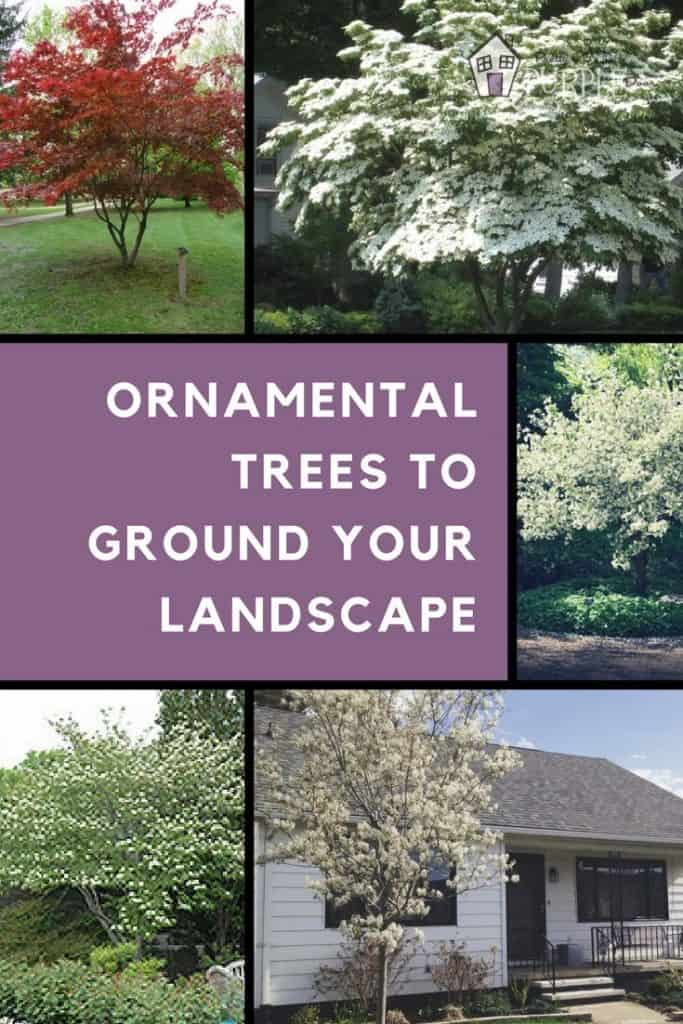 Ornamental Trees to Ground Your Landscape Pin