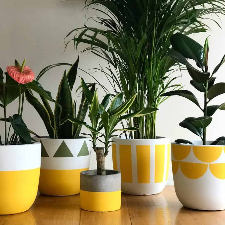 Mismatched flower planters in sunny yellow