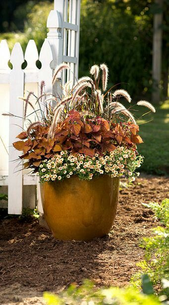 orange container by picket fence with peach colored flowers