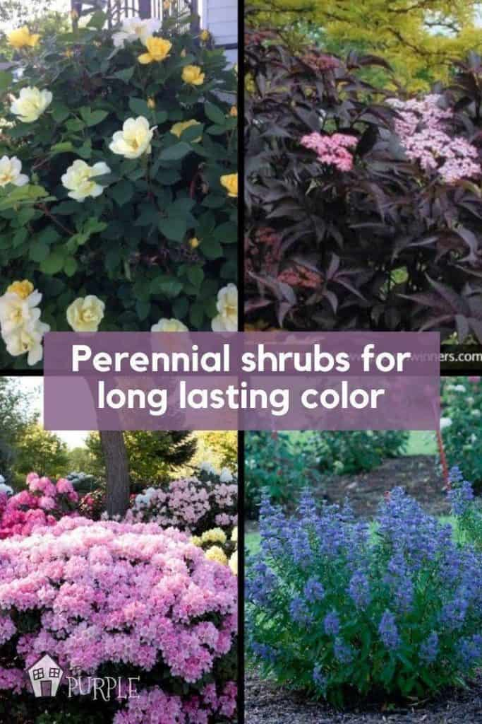 Grid with colorful flowering perennial shrubs in blue, pink and yellow.