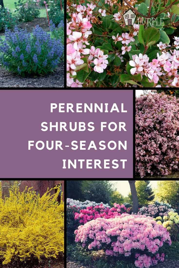 Layering your landscape with perennial shrubs | PrettyPurpleDoor.com
