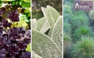 Create plant combinations in your garden