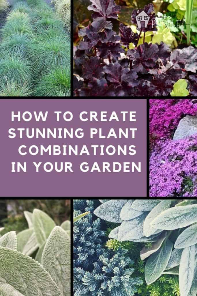 How to create stunning plant combinations in your garden with these easy steps.