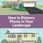 Before and After Illustration of Asymmetrical Balance in a Foundation Planting