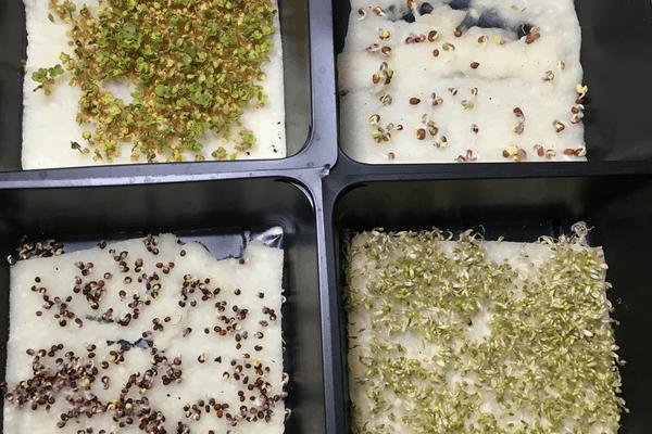 Bloomin' Bin Seeds in seed starting trays