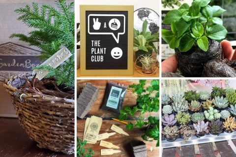 10 Great Plant Subscription Boxes & Who To Gift Them To