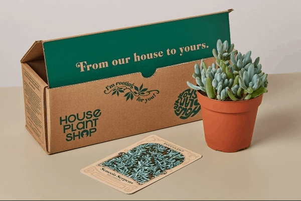 Monthly box of healthy and unique houseplants, succulents, air plants, aquatic or seeds.
