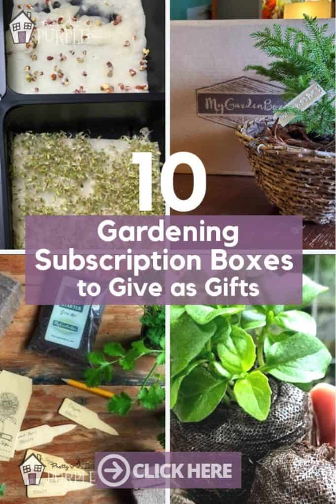 Plant Subscription Boxes Collage