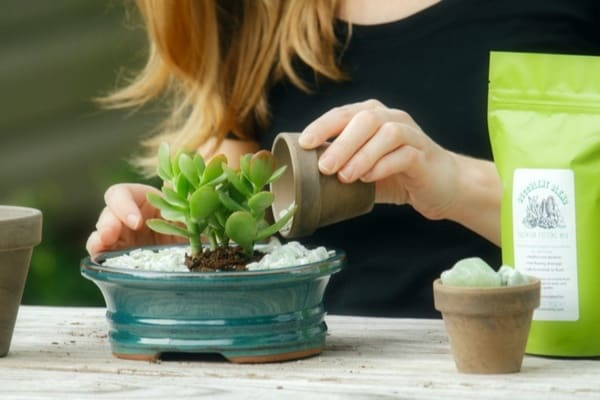 high-quality, curated collection of succulent plants, pots, media, and fun gardening goodies!