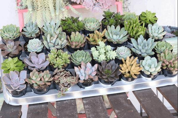 Succulents of the Month - 5 unique succulent plants