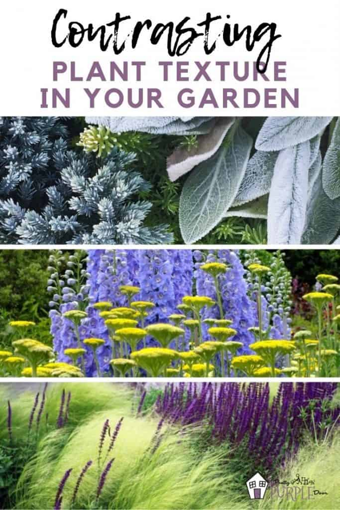 Contrasting plant texture in your garden