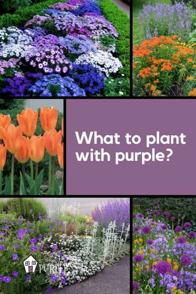 What to plant with purple flowers Pin