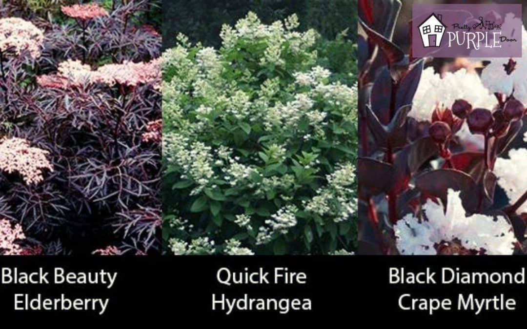15+ Unique Plants with Burgundy Leaves (Showstoppers!)