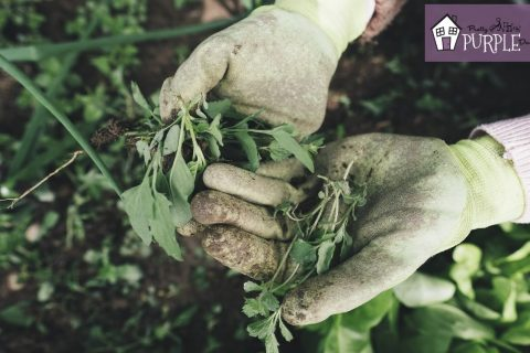 How to prevent weeds from sucking the life out of your garden