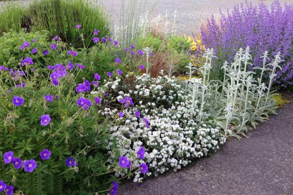 Purple and white flower garden