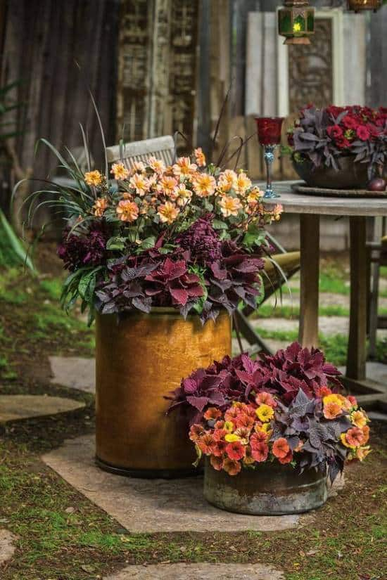 Tall and short rusty metal containers with rich orange and purple flowers