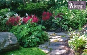 Stunning shade plants for your woodland garden