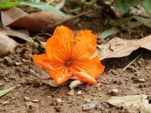 flower growing in poor soil