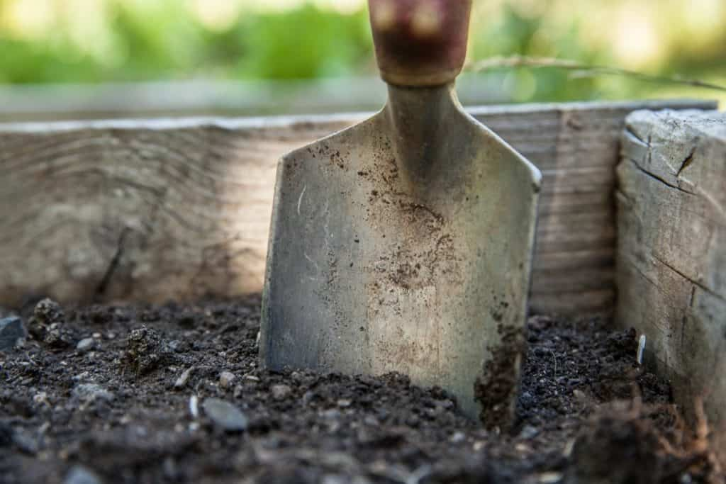 adding some compost to your native soil will help your new plant