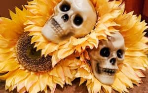 3 artificial sunflowers laying on ground with plastic skull heads on two of the facts