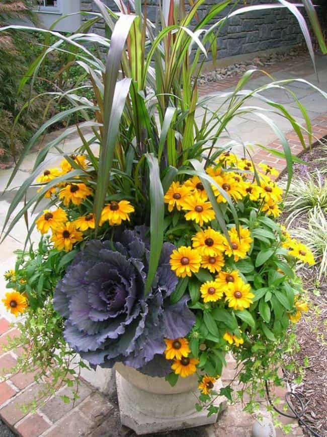 yellow flowers and ornamental cabbage in an outdoor planter