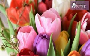Bouquet of pink, purple, red and white tulips