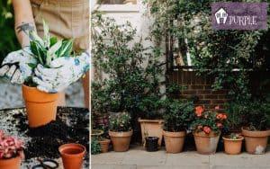 Mani di donna che invasano una pianta in un vaso di terracotta e varie piante in vaso lungo un muro